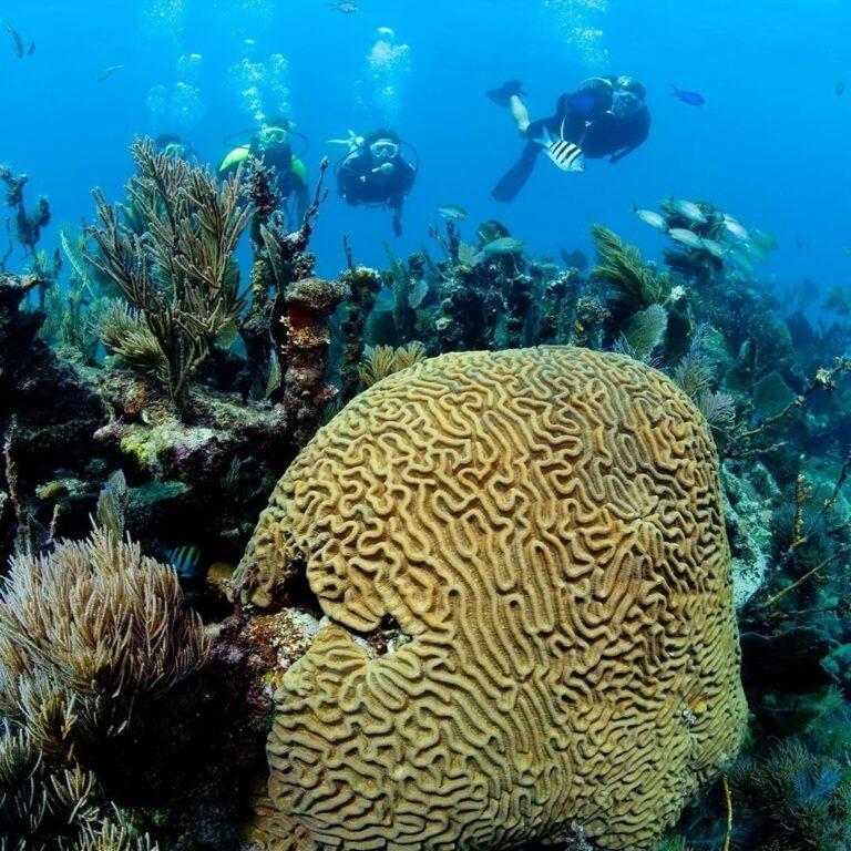 mergulhadores atrás de corais e flora marinha no Parque Marinho de Recife de Fora em Porto Seguro na Bahia